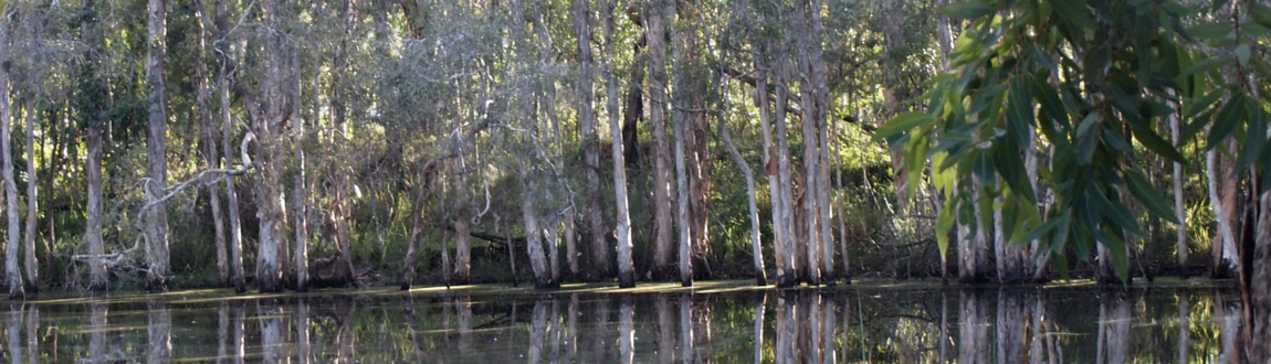 swamp trees.png
